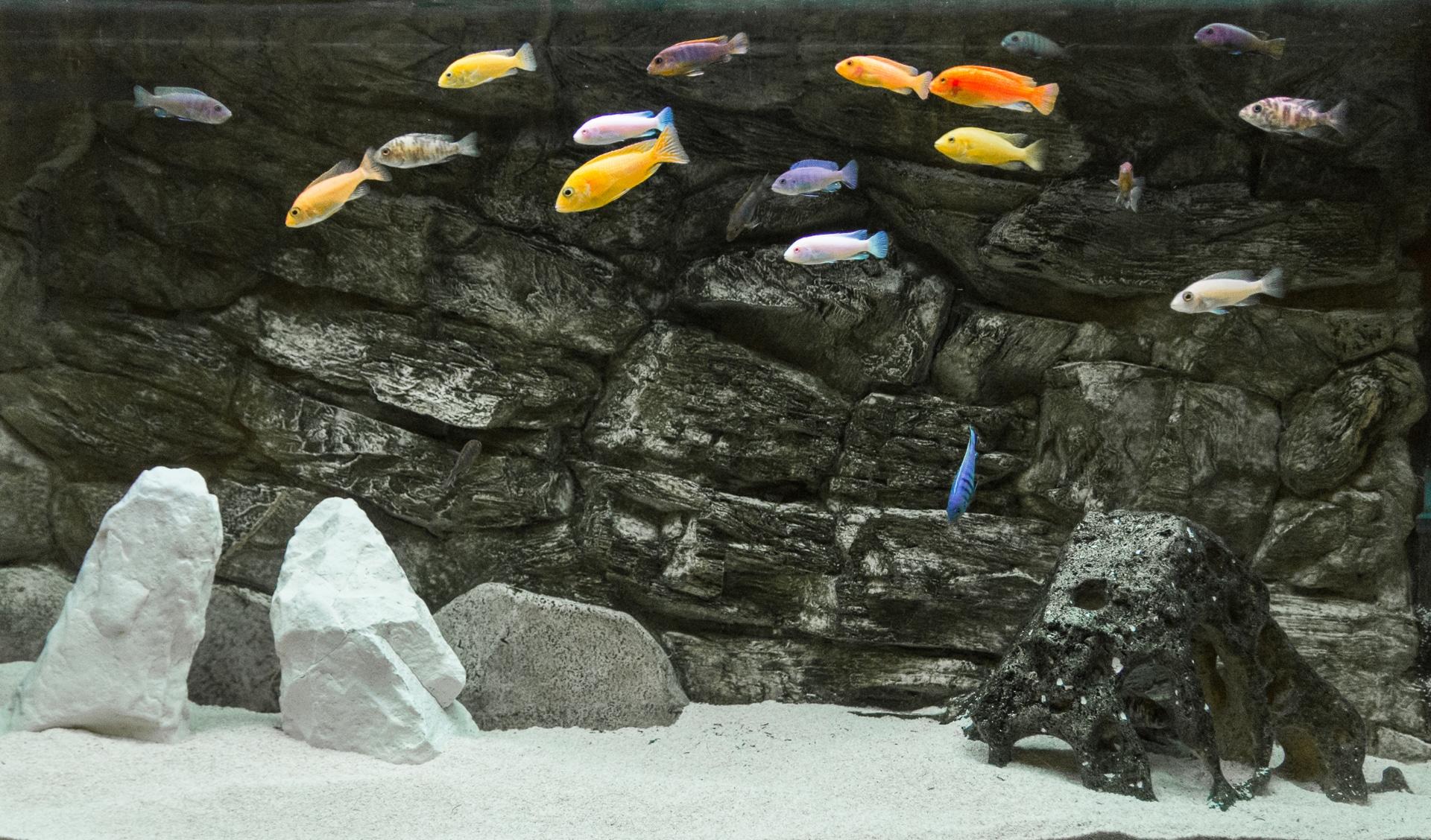 Akwarium z pyszczakami