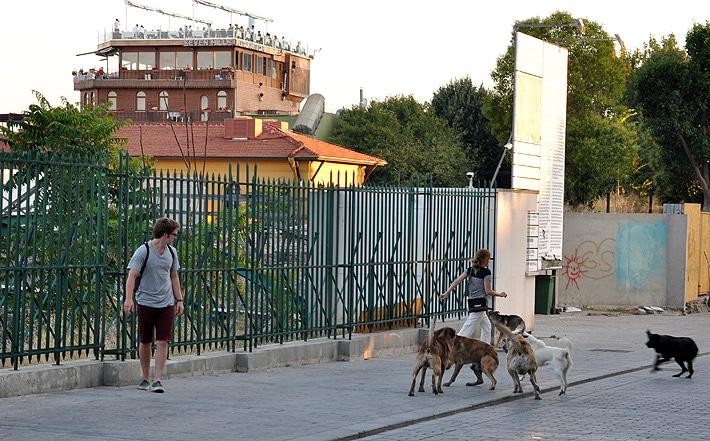 Psy w Stambule