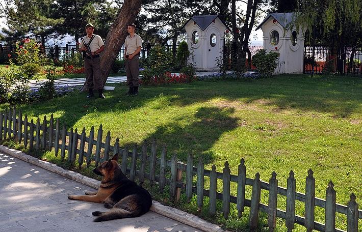 Stambuł i bezdomne psy