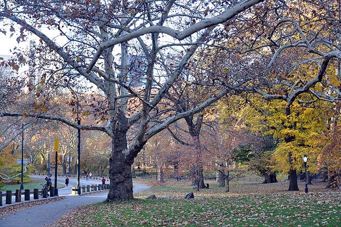 Jesień w Central Park
