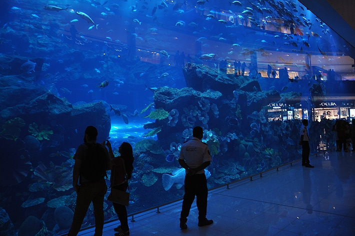 aquarium_ground