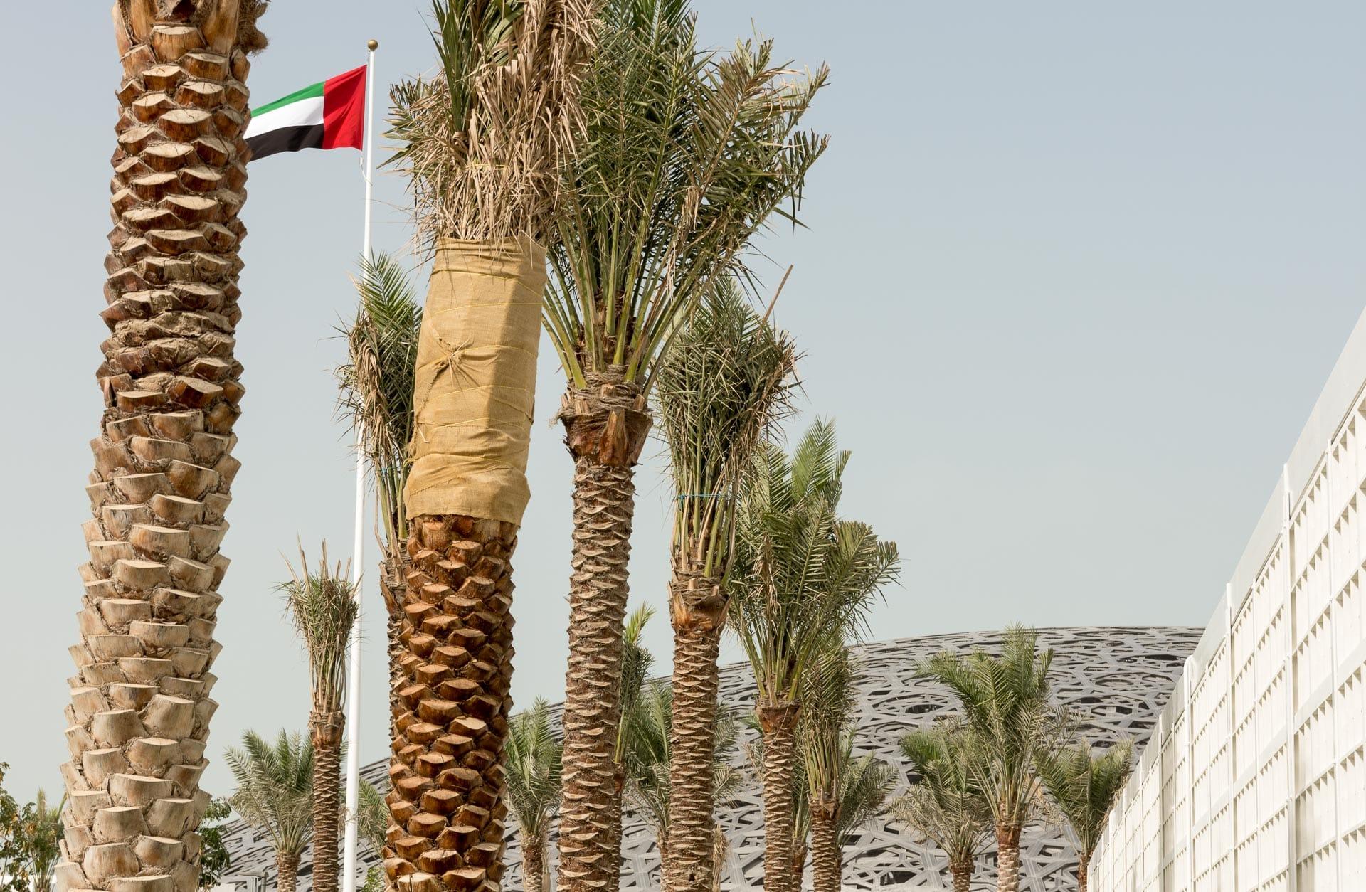 Muzeum Luwr, Abu Dhabi