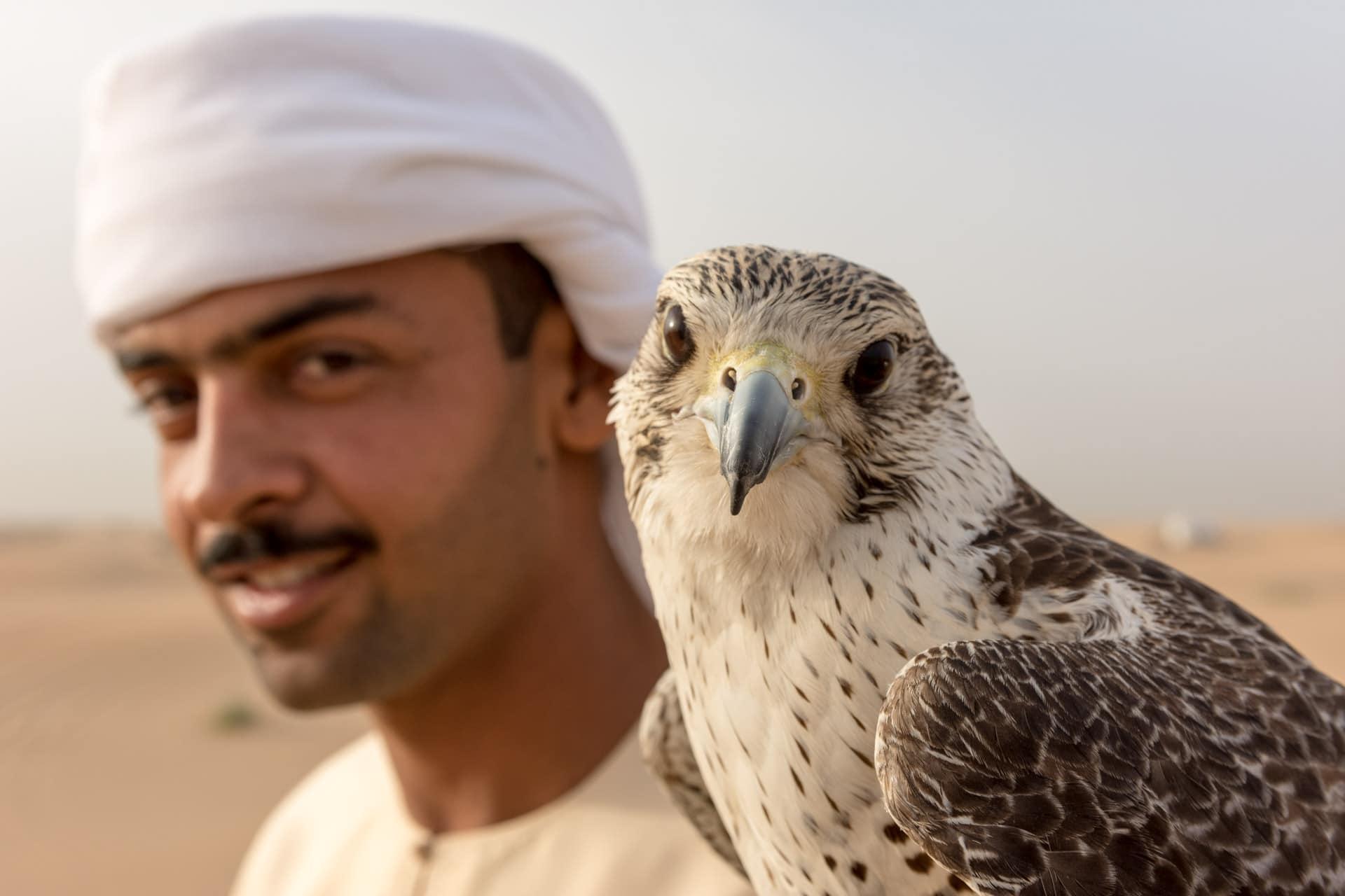 Sokół na pustyni w Dubaju