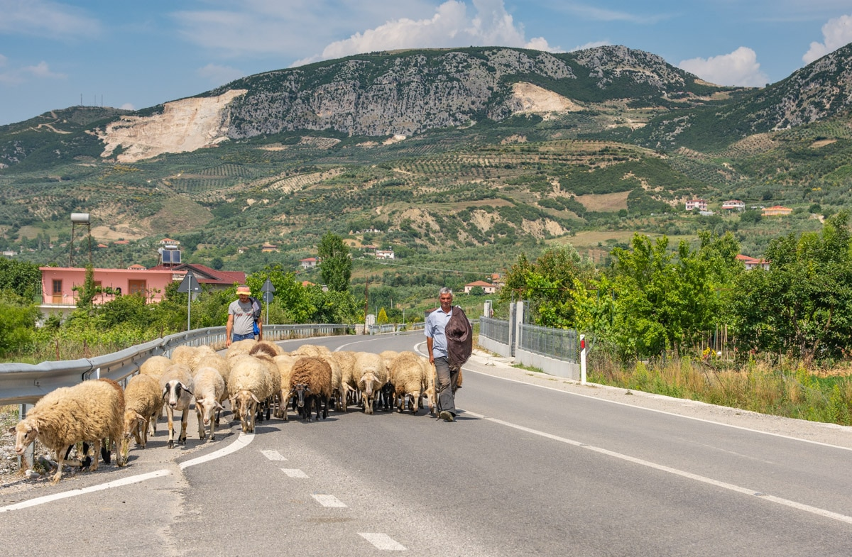 Barany w Albanii