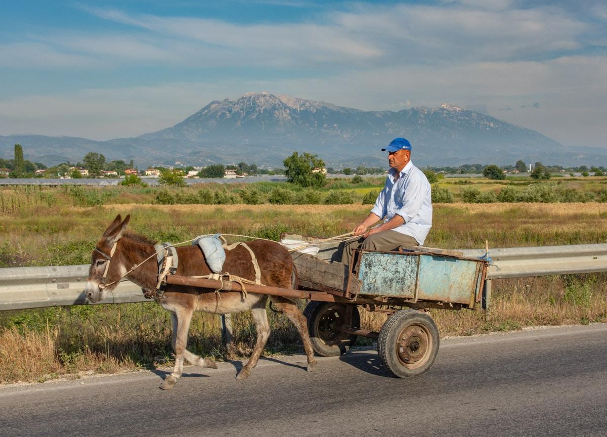 Osiołek w Albanii