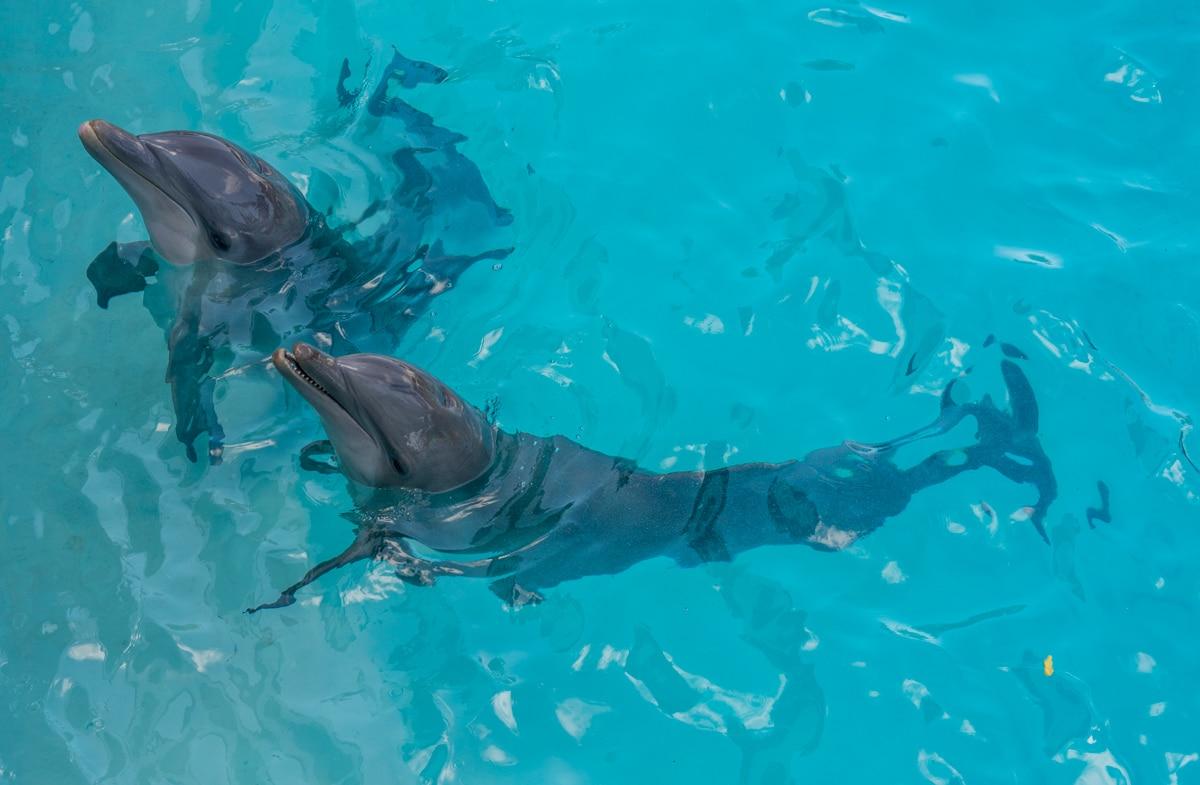 Delfiny w Cancun
