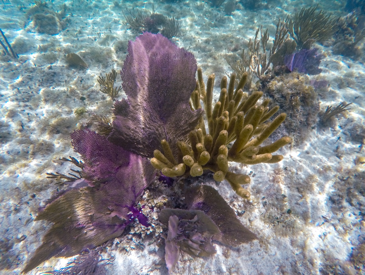 Rafa koralowa na Jukatanie