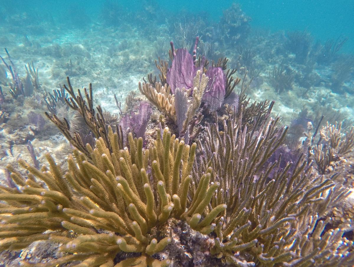 Rafa koralowa w Cancun